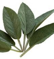 products_4090782-sage.jpg