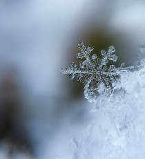 products_7515655-ice.jpg