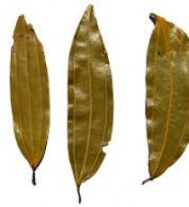 products_8165446-bayleaf.jpg