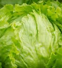products_9512064-lettuce.jpg