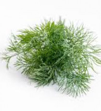 products_9687828-dill.jpg