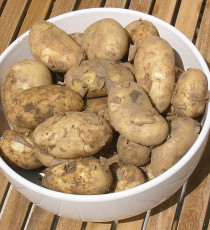 products_9952159-705px-Jersey_Royal_potatoes.jpg