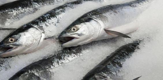 categories_3166563-fresh-fish.jpg
